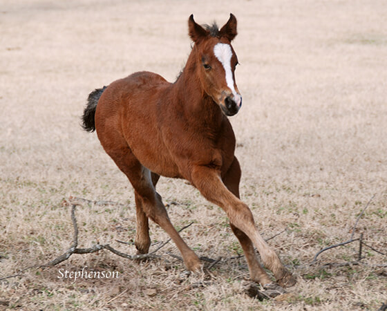 CD Diamond x Billies Smooth Cat - 2018 Filly