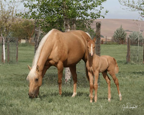 CD Diamond x Whiz N Spark - 2015 Colt