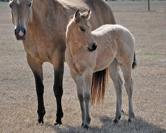 CD Diamond x Highly Unlimited - 2020 Colt