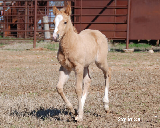 CD Diamond x Kalightascope - 2018 Colt